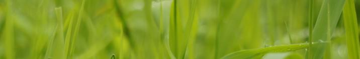 grass-411859 (1)