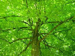 vert bois