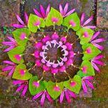 mandala fleurs